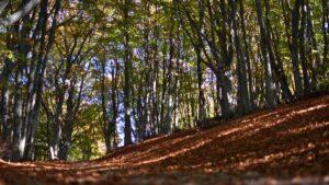viaggio organizzato in pullman nel parco regionale del monte san vicino Trekking alla Riserva Regionale del Monte San Vicino in notturna
